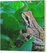 Pacific Tree Frog Wood Print