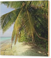 Palm Trees Growing On Tropical Beach Wood Print