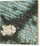 Parsons Chameleon Calumma Parsonii Wood Print