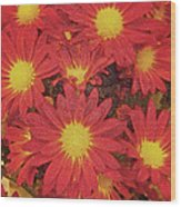 Patterned Petels Wood Print