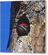 Peeking Out Wood Print