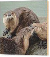 Pelican Creek Otter Family Wood Print