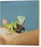 Pet Iguana Wood Print by Cristina Pedrazzini