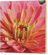 Petals Of Pink Wood Print