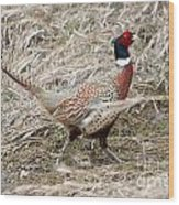 Pheasant Walking Wood Print