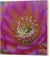 Pink And Orange Cactus Flower Wood Print