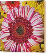 Pink And Yellow Mums Wood Print