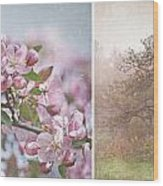 Pink Apple Blossoms Wood Print by Sandra Cunningham