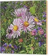 Pink New York Aster- Symphyotrichum Novi-belgii Wood Print