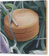 Planktonic Diatom Alga, Sem Wood Print by Steve Gschmeissner