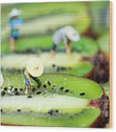 Planting Rice On Kiwifruit Wood Print