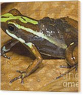 Poison Frog With Eggs Wood Print