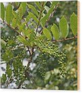 Poison Sumac Wood Print