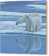 Polar Bear Ursus Maritimus Pair On Ice Wood Print
