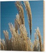 Pompas Grass 1 Wood Print