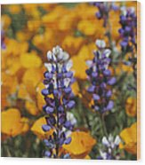 Poppies And Lupine Flowers In A Santa Wood Print
