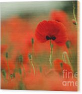 Poppy Flowers 01 Wood Print
