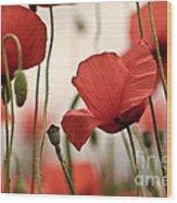 Poppy Flowers 04 Wood Print