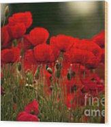 Poppy Flowers 05 Wood Print