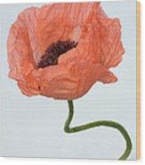 Poppy (papaver Sp.) Wood Print