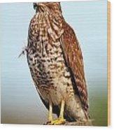 Portrait Of A Red Shouldered Hawk Wood Print