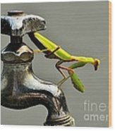 Praying Mantis Wood Print by Dean Harte