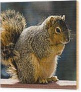 Praying Squirrel  Wood Print
