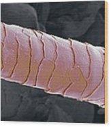 Primate Eyelash, Sem Wood Print