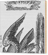 Printers Cut, 1825 Wood Print