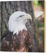 Proud Eagle Wood Print by Tammy Smith
