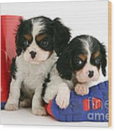 Puppies With Rain Boots Wood Print