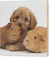 Puppy And Guinea Pigs Wood Print