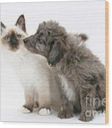 Puppy And Kitten Wood Print