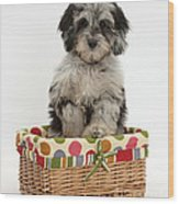 Puppy In A Basket Wood Print