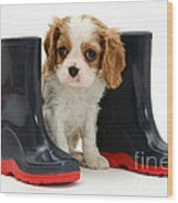 Puppy With Rain Boots Wood Print