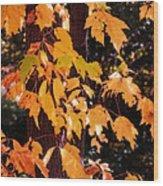 Pure Gold  Wood Print