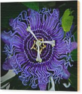 Purple Flower 1 Wood Print