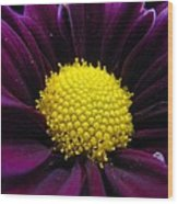 Purple Jewel Wood Print