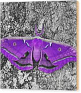 Purple Polyphemus Wood Print