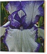 Purple Ruffles Wood Print
