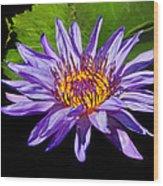 Purple Waterlily Wood Print