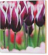 Purplish Tulips Wood Print