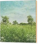 Queen Anne's Lace Wildflowers Wood Print