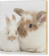 Rabbit And Baby Bunny Wood Print