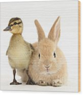 Rabbit And Duckling Wood Print