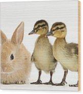 Rabbit And Ducklings Wood Print