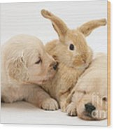 Rabbit And Puppies Wood Print