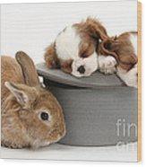 Rabbit And Spaniel Pups Wood Print