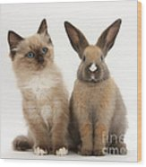 Ragdoll-cross Kitten And Young Rabbit Wood Print