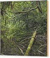 Rain Forest On Vancouver Island Wood Print
